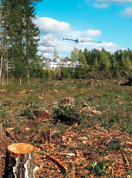 Informe Preventivo de Impacto Ambiental